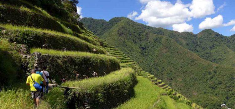 Banaue-Terraces